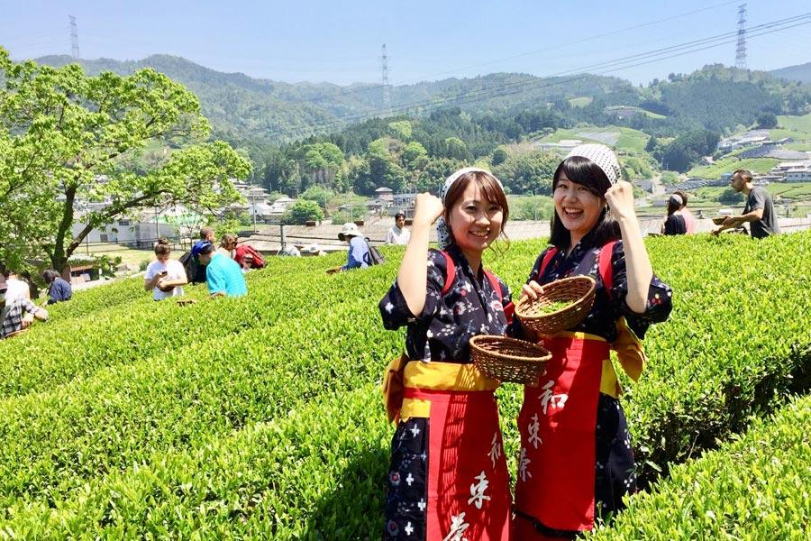 plantaciones de té en Uji Kyoto
